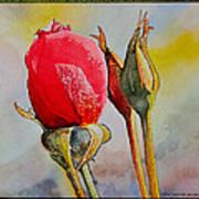 A Rose Awaitingtwo More Roses Art Print