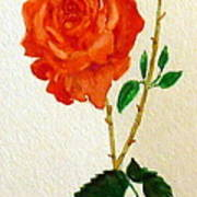 A Rose For Rosa Art Print