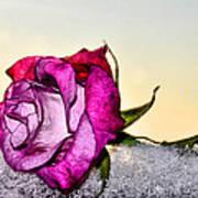 A Rose In Winter Art Print