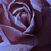 A Rose That Glitters Art Print