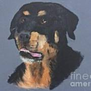 A Rottie Named Thor Art Print
