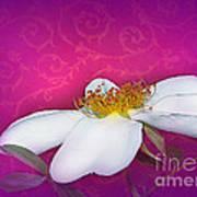 A Royal Rose Art Print