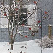 A Sea Of Cardinals At The Feeder Art Print