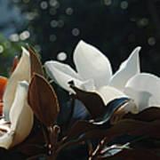 A Sea Of Magnolias Art Print