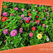 A Sea Of Zinnias 06 Art Print