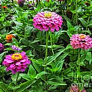 A Sea Of Zinnias 09 Art Print