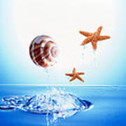 A Shell And Two Starfish Floating Art Print