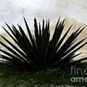 A Simple Yucca Art Print