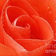 A Single Bloom 3 Art Print