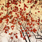 A Skyward View Of The Bare Branches Art Print