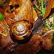 A Slow Snail Art Print
