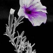 A Splash Of Purple Art Print