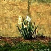 A Spot Of Spring Art Print