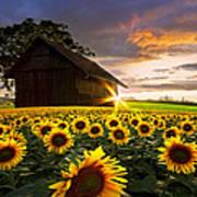 A Sunflower Moment Art Print