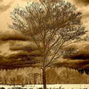 A Tree At Appleton Art Print