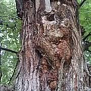 A Tree Creature Art Print