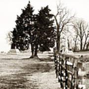 A Tree Grows In Gettysburg Art Print