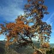 A Tree In Arcadia - Greece Art Print