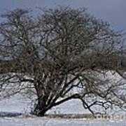 A Tree In Canaan 2 Art Print