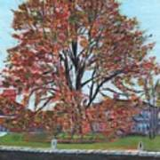 A Tree In Sherborn Art Print