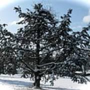 A Tree In Winter Art Print