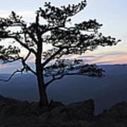 A Tree Of Mountains Art Print