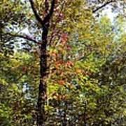 A Tree's Life Art Print