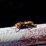 A Vespid Wasp  Art Print