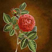 A Vintage Rose Romance L Art Print