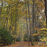 A Walk In The Woods II Art Print