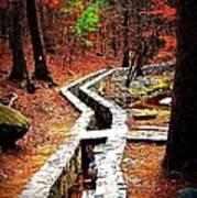 A Walk Through The Woods Art Print