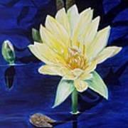 A Waterlily Art Print
