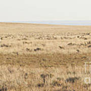 A White Mustang Feeds On Dry Grass Fields Of Arizona Art Print