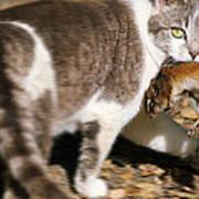 A Wild Cat Catching A Chipmunk Art Print
