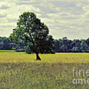 A Wind Blown Tree On The Prairie Art Print