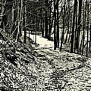 A Winter's Trail Art Print