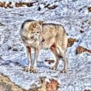 A Wolf In Winter Art Print by Skye Ryan-Evans