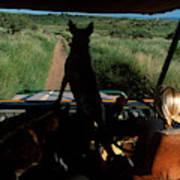A Woman Sits In Her Safari Jeep Art Print