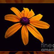 A Yellow Burst Of Sunshine Floral Photography Art Print