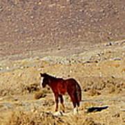 A Young Mustang Art Print
