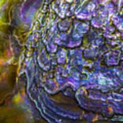 Abalone Shell 6 Art Print
