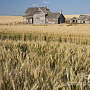 Abandoned Farmhouse In Wheat Field Art Print