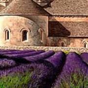 Abbey Lavender Art Print