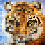 About 400 Sumatran Tigers Print by Charlie Baird