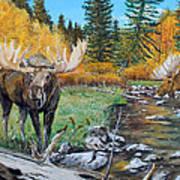 Above The Lake ..moose Art Print