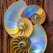 Abstract Chambered Nautilus Art Print