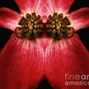 Nature In Abstract Dogwood Blossom 2 Art Print