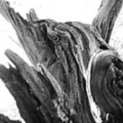 Abstract Of A Fallen Tree Root Art Print