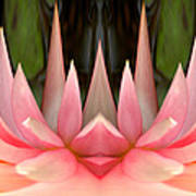 Abstract Pink Water Lily Art Print