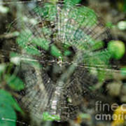 Abstract Spider Web Art Print